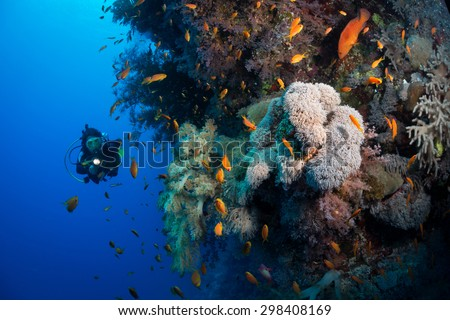 Woman diver explores corals on the wall at Ruqia Island, Red Sea, Egypt