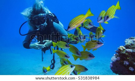 Woman diving with a shoal of Blue striped snappers