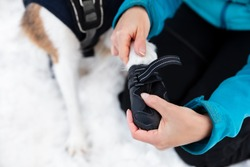 Woman dressing dog booties or shoes at the dog paws, protection and shelter at winter season