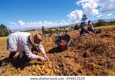 Woman farmer Photo stock ©