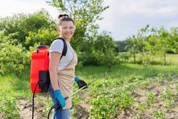 Woman farmer sprays potato plants in the vegetable garden, using backpack sprayer, protecting and caring for growing vegetables from diseases and pests