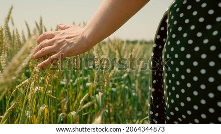 Woman farmer walks through a wheat field at sunset, touching green ears of wheat with his hands. Hand farmer is touching ears of wheat on field in sun, inspecting her harvest. Agricultural business.