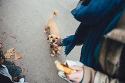 Woman feeding a dog in the street