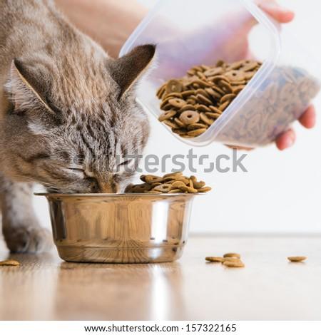 Woman Feeding Hungry Pet Cat
