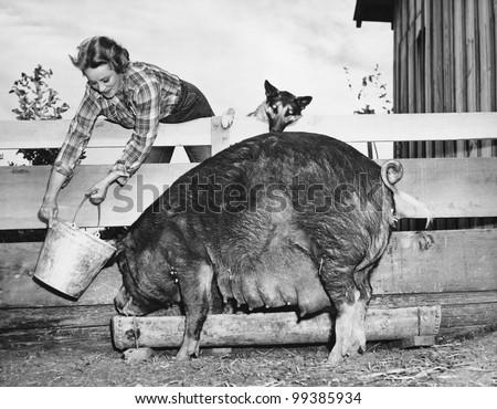 woman feeding pig