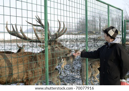 woman feeding stag