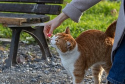 Woman feeds a stray cat in park. Istanbul, Turkey.