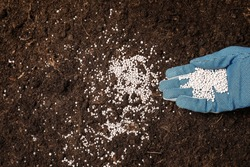 Woman fertilizing soil, closeup view. Gardening season