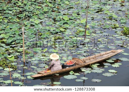 woman fishing in lotus pond.