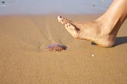 woman foot ready to push a medusa in a beach