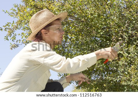 Woman gardener cutting back tree branches and hedge in garden, on sunny afternoon
