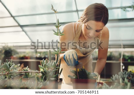 Woman gardener planting cactus plant in a pot in greenhouse. Female worker working at a cactus garden.