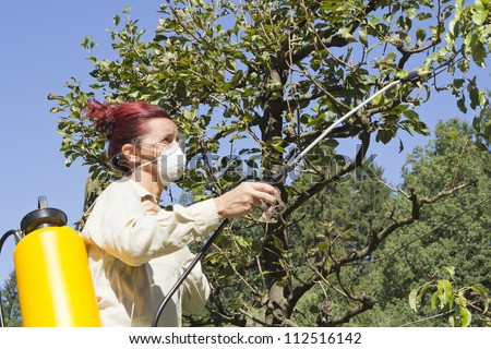 Woman gardener using a sprayer for applying an insecticide or fertilizer to fruit trees, on sunny morning