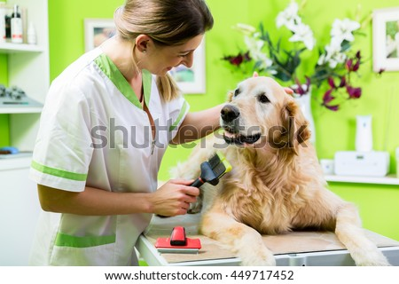 Dog Grooming Teeth Cleaning
