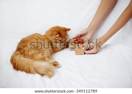 Woman gives her furry pet a christmas present. Ginger cat looks curiously at a gift in craft paper with crocheted red snowflake.