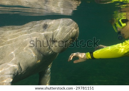 Woman greeting a manatee with reflections on the water's surface.