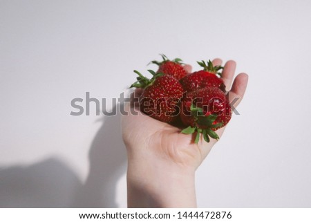 Woman hand holding handful of freshly picked strawberries on self picking strawberry farm field, leaves and two flowers in background.