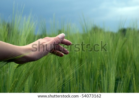 woman hand over green wheat