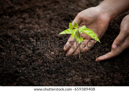 Woman hand planting young tree on black soil as save world concept #659389408