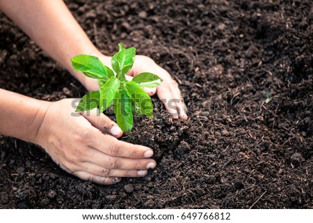Woman hand planting young tree on black soil as save world concept in vintage color tone #649766812