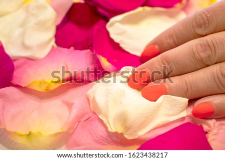 Woman hand touches rose petals.