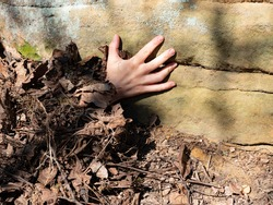 Woman hand with fingers climb up on rock from rotten leaves. Fingers pointing up