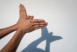 Woman hands creating silhouette shadow of animal on white wall background. Hand shadow of bird or butterfly