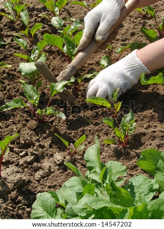 woman hands hoeing the vegetable bed at the kitchen garden
