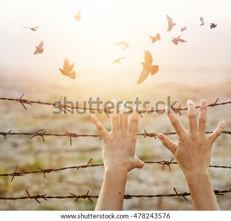 Woman hands hold the rusty sharp bare wire with hope longing for freedom among flying birds, Human rights concept