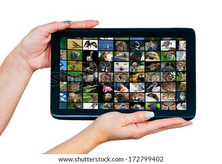 woman hands holding tablet with animal pictures on the screen