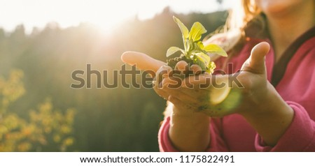 Woman hands planting a seed during sunny day in backyard garden - Girl gardening at sunset in spring time - Focus on fingers - Nature, lifestyle, vegetarian, vegan and nurture concept