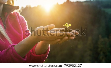 Woman hands planting a seed during sunny day in backyard garden - Girl gardening at sunset in spring time - Focus on plant - Nature, lifestyle, green thumb and nature concept