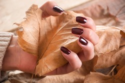 Woman hands with brown gel nails polish holds dry fall leaf on wooden and leaves background. Autumn manicure concept. Close up, selective focus