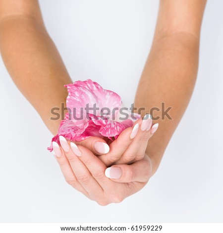 Woman hands with french manicure holding pink flower close-up