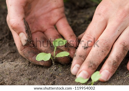 woman hands with sprouts of Japanese radish