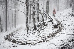 Woman hiking in snow foggy forest. Hiking path in snow forest. Beech wood. Lusatian mountains, Czech Republic.