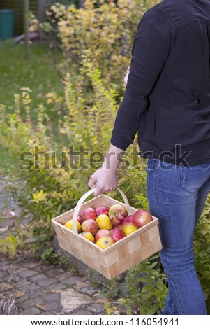 woman holding a basket full with fresh picked apples.