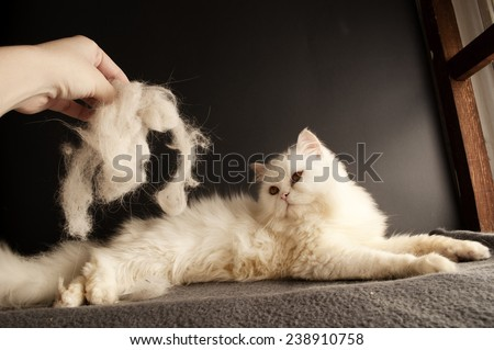 Woman holding a clump of cat hair in front of white cat
