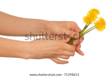 woman holding a few yellow dandelions in the hand