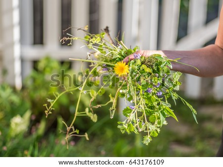 Woman holding a handful of weeds from garden - hands only, soft focus