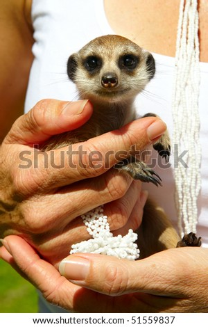 Woman holding a small meerkat in her hands