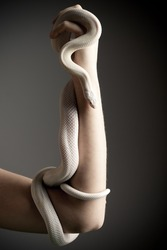 Woman Holding A White Snake