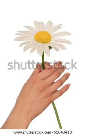 woman holding big white daisy in the hand
