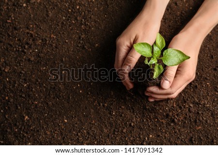 Woman holding green seedling on soil, top view. Space for text #1417091342