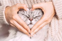 Woman holding her lovely fluffy cute cat face and making a heart shape with her hands. Love for the animals. Pets and lifestyle concept.