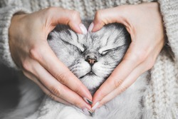 Woman holding her lovely fluffy cute cat face and making a heart shape with her hands. Love for the animals. Pets and people lifestyle. Concepts of love, St. Valentine's Day
