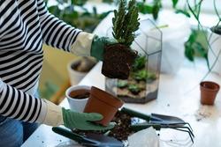 Woman holding mini succulent garden in geometric glass florarium vase , closeup. Mini home garden concept