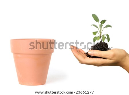 Woman Holding Seedling and Roots Preparing to Plant in a Clay Pot