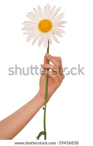 woman holding white chamomile in the hand