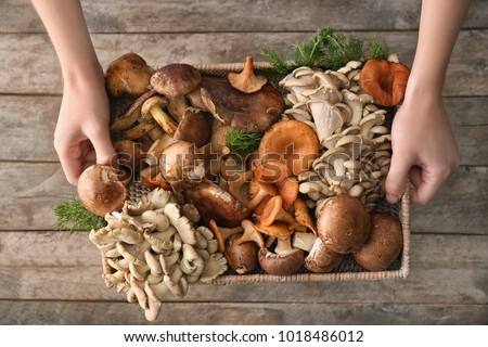 Woman holding wicker tray with variety of raw mushrooms on wooden background